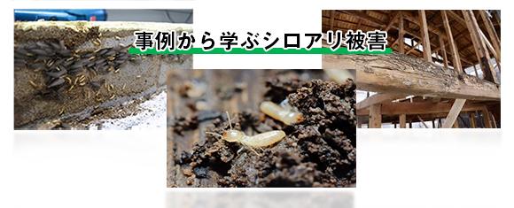 事例から学ぶシロアリ被害のイメージ画像