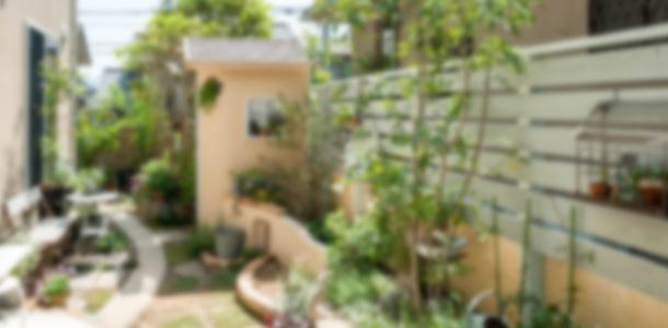 シロアリが発生した庭
