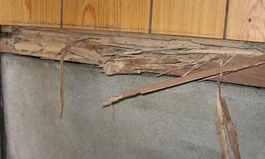 イエシロアリによって腐った木材