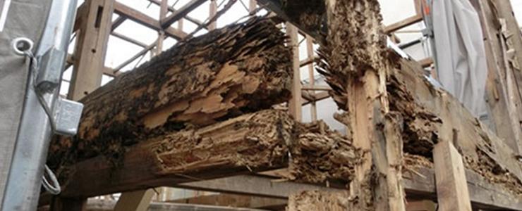 シロアリ被害を受けた築10年の家屋
