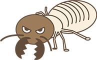 様々な種類がいるシロアリ
